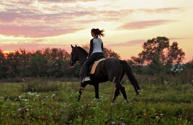 Đất mềm làm ngựa khụy chân, còn lời ngon ngọt dễ làm người té ngã. (Ảnh: Internet)