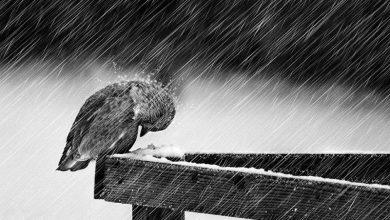 Photo of Im lặng – Sức mạnh của kẻ thông minh hay sự lạnh lùng?