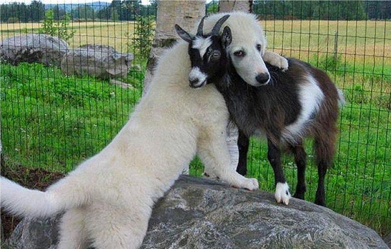 Bạn bè thực sự chính là đưa tay ra vào những lúc cần nhau nhất.