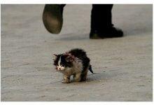 Photo of Bài học sâu sắc về lòng vị tha từ chú mèo hoang có tên Xấu Xí