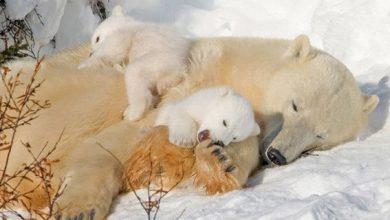 """Photo of Loài gấu ngủ đông tới 6 tháng, vậy chúng """"đi toilet"""" vào lúc nào?"""