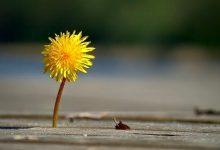 Photo of Học cách tự trọng như thế nào