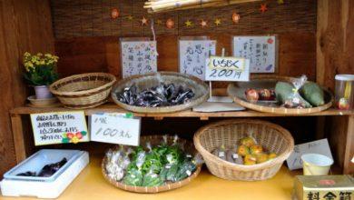 Photo of Bài học về phép thử lương tâm và cách sống đáng noi gương chỉ có ở người Nhật