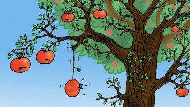 Photo of 3 người cùng kinh doanh 1 loại táo, chỉ 1 người thành công, vì sao?