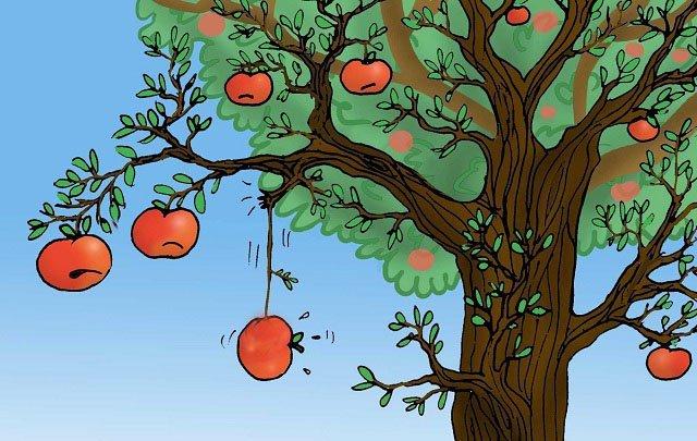 cau chuyen trai tao 3 người cùng kinh doanh 1 loại táo, chỉ 1 người thành công, vì sao?