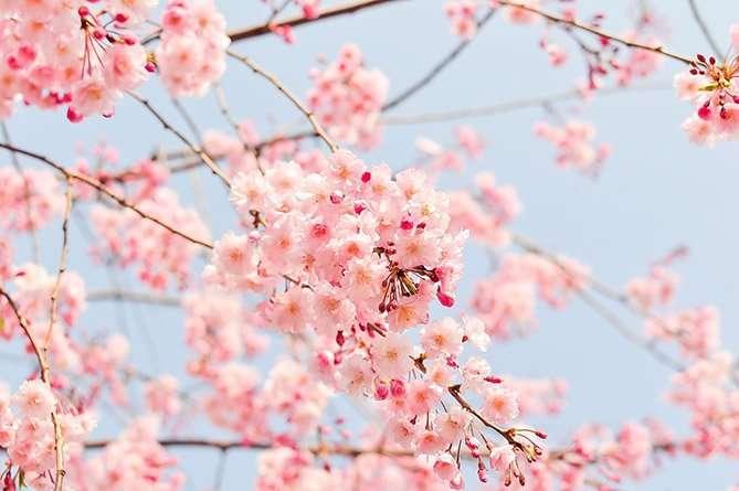 12 cau cham ngon nhat ban 1 12 câu châm ngôn thâm thúy của người Nhật khiến bạn thay đổi cách nhìn cuộc sống