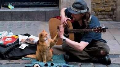 Photo of 9 quyển sách hay về loài mèo cực kỳ đáng yêu