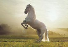 Photo of Tuổi trẻ như một chú ngựa, không chịu chạy không rèn luyện thì mãi chỉ là ngựa thường chẳng bao giờ trở thành chiến mã