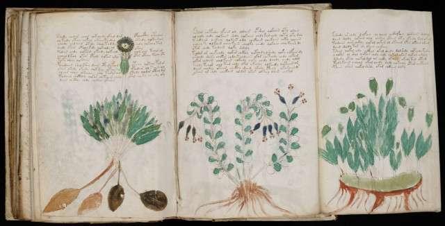 ban thao voynich Những cuốn sách cổ và bí ẩn nhất hành tinh