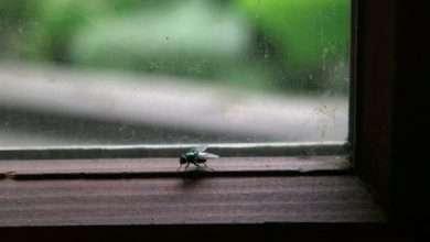 Photo of Chuyện con ruồi và ô cửa kính: Nỗ lực thôi là chưa đủ, đôi khi thành công cần tới sự thay đổi không ngờ