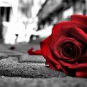 flowers color red black rose love passion two wallpaper flower 2016 1920x1080 125x125 - Tình yêu là gì?