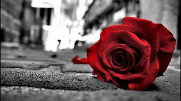 flowers color red black rose love passion two wallpaper flower 2016 1920x1080 370x208 - Tình yêu là gì?