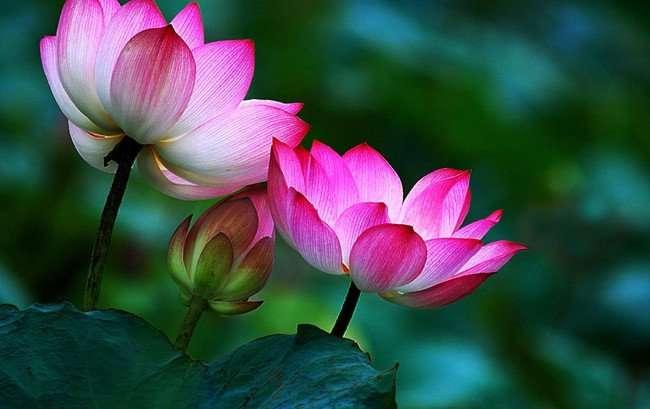 emotion 16 Bài học thay đổi quan niệm sống và có được hạnh phúc từ thiền sư Thích Nhất Hạnh