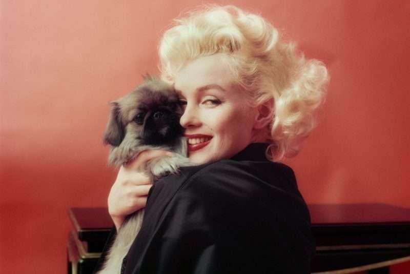 nhan vat monroe 1 Marilyn Monroe: Kho tàng trải nghiệm từ cuộc đời đau thương