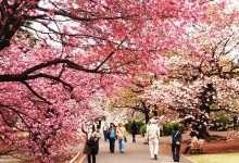 Photo of 10 nét đặc trưng trong giáo dục khiến Nhật Bản cường thịnh