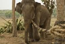 Photo of Chuyện con voi và sợi dây thừng: Không dám đối mặt với điểm yếu của bản thân, cả đời chẳng bao giờ thành công!