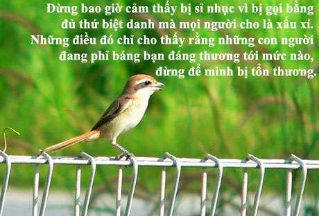 """giet con chim nhai quote 1 20 câu nói hay nhất của nữ nhà văn """"Giết con chim nhại"""""""