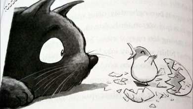 Photo of Chuyện con mèo mù và con chó răng vểnh.