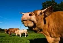 Photo of Một con bò và bài học thức tỉnh đời người: Ai cũng cần biết để sống ý nghĩa hơn