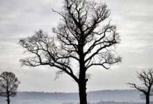 Photo of Chuyện ba cái cây và bài học cuộc sống ý nghĩa: Đừng vội từ bỏ ước mơ khi bạn chưa trải qua sóng gió