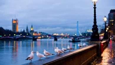 Photo of 9 tựa sách hay về nước Anh cổ kính tráng lệ