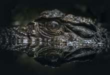 Photo of 7 phim hay về cá sấu ám ảnh người xem