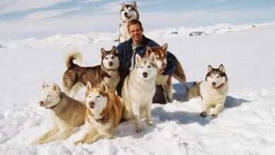 Photo of 15 phim hay về loài chó đầy cảm động