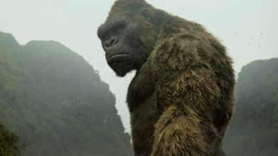 Photo of 6 phim hay về loài khỉ nổi bật và đầy thú vị