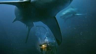 Photo of Hung thần đại dương