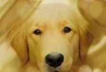 Photo of Mục Đích Sống Của Một Chú Chó