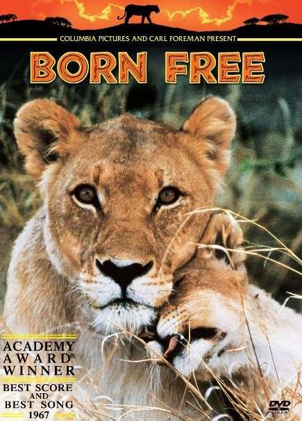 phim Born Free 1966 7 phim hay về loài sư tử đáng xem