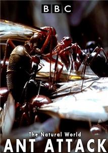 phim Natural World Ant Attack 7 phim hay về loài kiến đáng xem