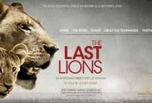 Photo of 7 phim hay về loài sư tử đáng xem