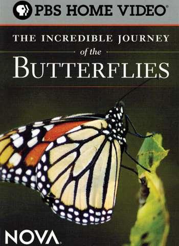 phim The Incredible Journey of the Butterflies 1 3 phim hay về loài bướm đầy thú vị
