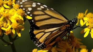 Photo of 3 phim hay về loài bướm đầy thú vị