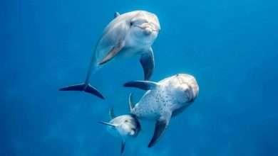 Photo of 6 phim hay về cá heo đáng xem