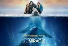 Photo of 6 phim hay về cá voi đáng xem