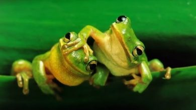 Photo of 4 phim hay về loài ếch đáng xem