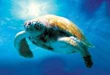 Photo of 4 phim hay về loài rùa đáng xem
