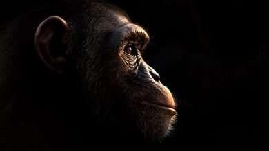 Photo of 9 phim hay về loài tinh tinh thông minh