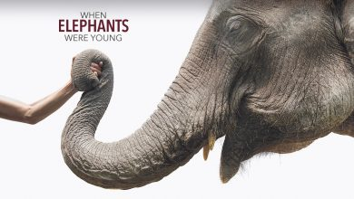 Photo of 6 phim hay về loài voi xem để suy ngẫm