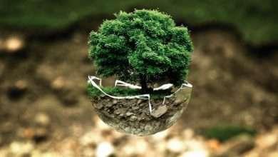 Photo of 5 cuốn sách hay về bảo vệ môi trường giúp bạn sống xanh, sạch, đẹp