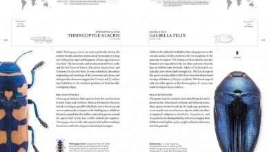 Photo of 4 quyển sách hay về bọ cánh cứng thú vị và đầy màu sắc