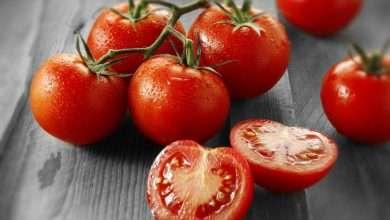 Photo of 6 cuốn sách hay về cà chua khuyên đọc