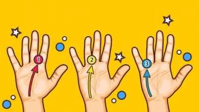 Photo of 7 quyển sách hay về chỉ tay giúp đoán định được vận số của đời người