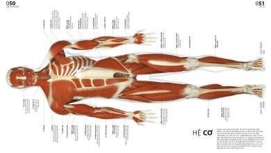 Photo of 8 cuốn sách hay về cơ thể con người đầy thú vị