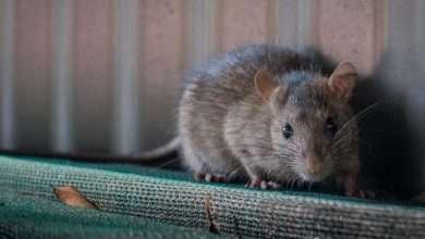 Photo of 5 cuốn sách hay về loài chuột khiến người đọc đi từ tò mò đến thú vị, kinh hoàng đến hấp dẫn