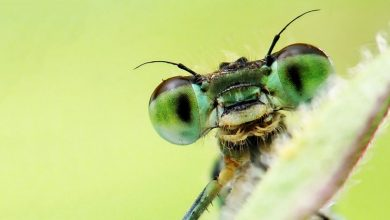 Photo of 3 sách hay về côn trùng minh họa đẹp mắt, sống động