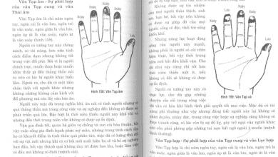 Photo of 8 quyển sách dạy xem chỉ tay đơn giản, dễ hiểu